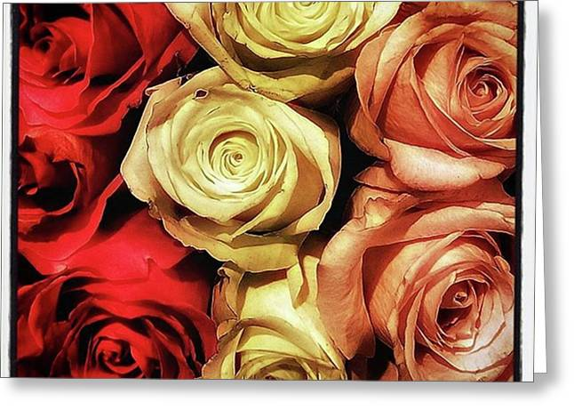 Rows Of Roses. Like Ballerinas Lining Greeting Card by Mr Photojimsf