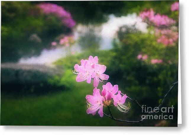 Royal Azaleas At Asticou Azalea Garden Greeting Card