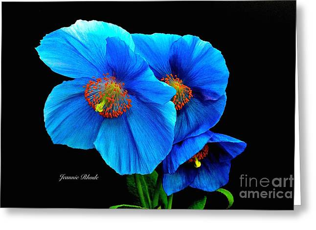Royal Blue Poppies Greeting Card