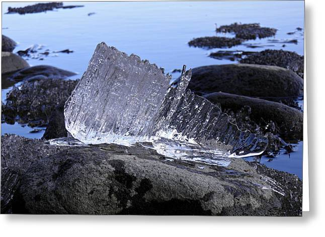 Greeting Card featuring the photograph Royal Ice Creature by Sami Tiainen