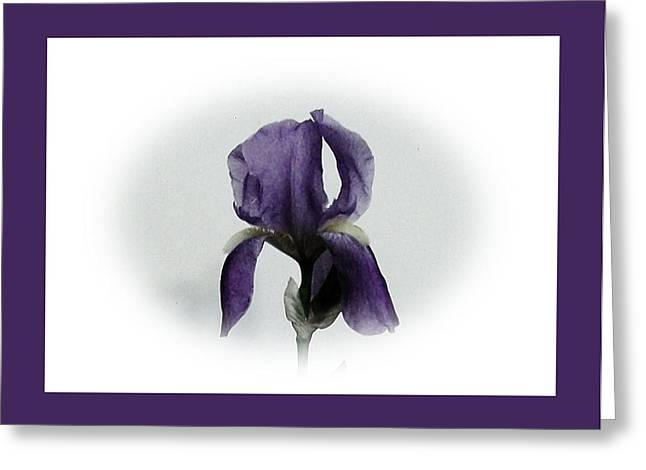 Royal Iris Greeting Card by Marsha Heiken