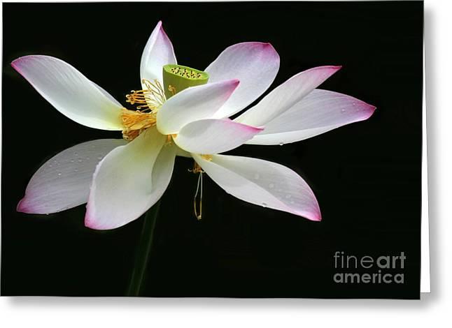 Royal Lotus Greeting Card