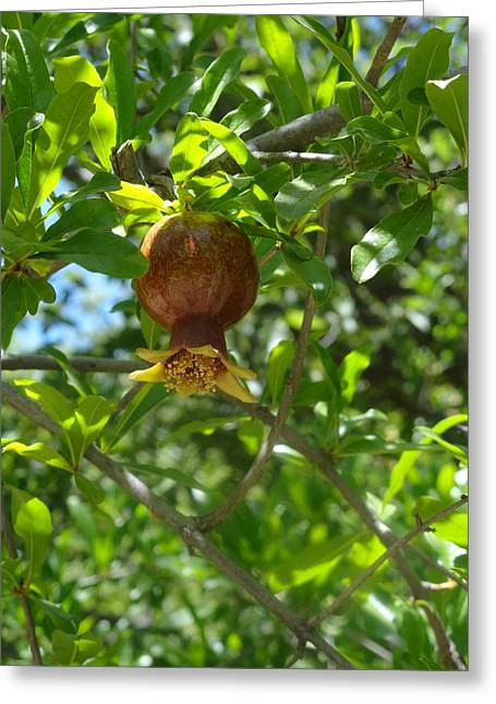 Royal Onion Pomegranate Greeting Card