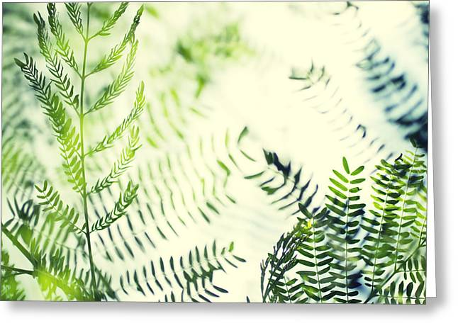 Royal Poinciana Tree Leaves - Hipster Photo Square Greeting Card