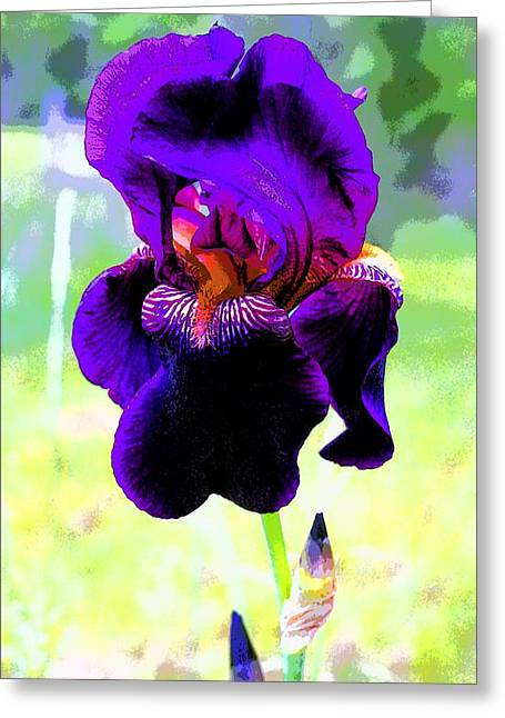 Royal Purple Iris Image Greeting Card by Paul Price