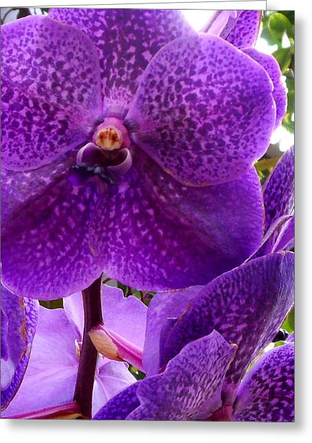 Royal Purple Orchids Greeting Card