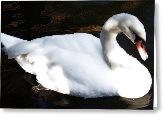 Royal Swan Greeting Card