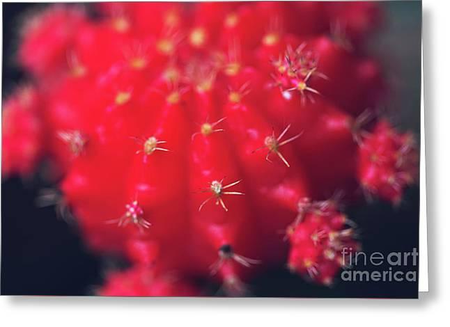 Ruby Ball Cactus Greeting Card by Joan McCool