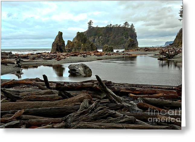 Ruby Beach Driftwood Greeting Card
