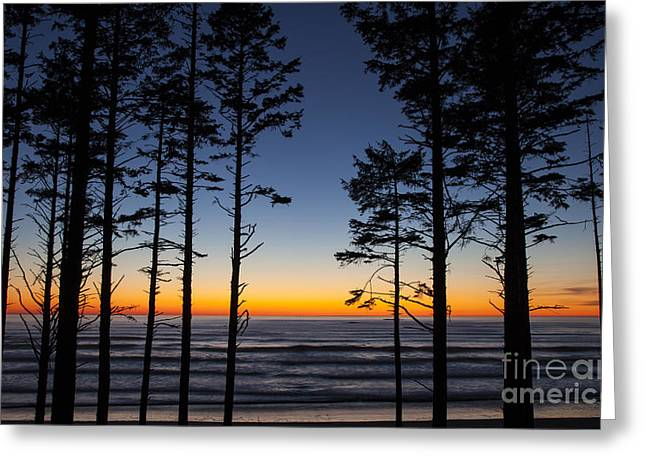 Ruby Beach Trees #4 Greeting Card