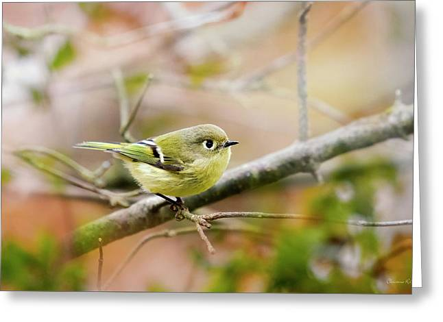 Ruby Crowned Kinglet Greeting Card by Christina Rollo