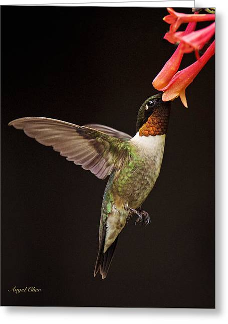 Greeting Card featuring the photograph Ruby Male by Angel Cher