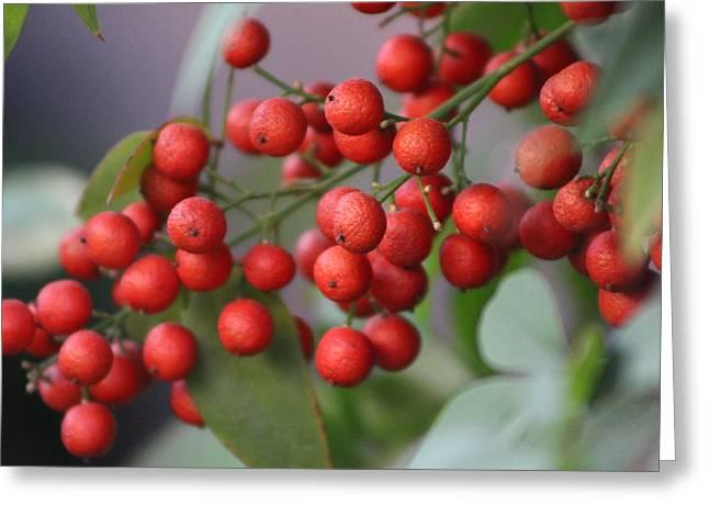 Ruby Red Berries Greeting Card