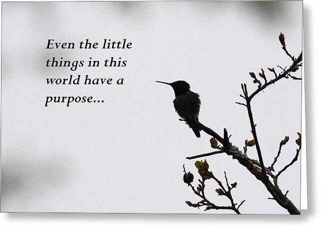 Ruby-throated Hummingbird - Little Things Greeting Card