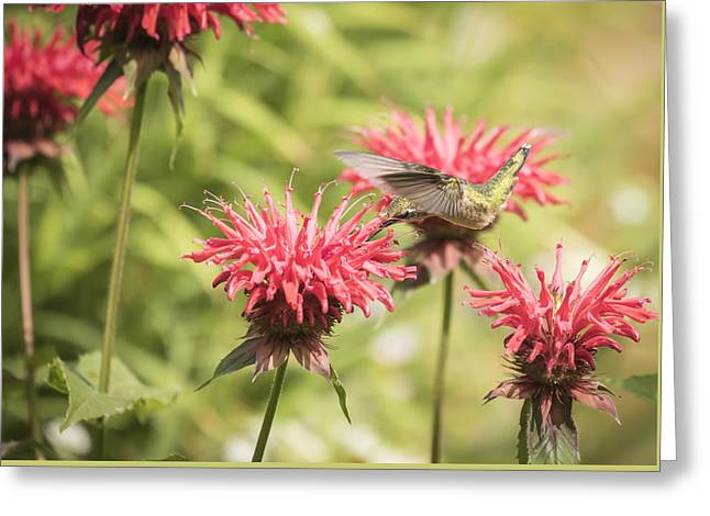 Ruby Throated Hummingbird 1-2015 Greeting Card by Thomas Young