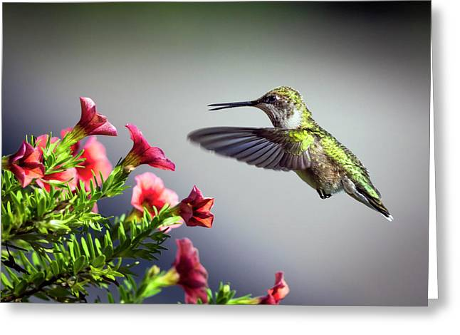 Ruby Throated Hummingbird #1 Greeting Card
