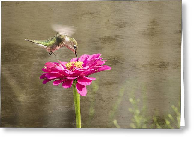 Ruby Throated Hummingbird 12-2015 Greeting Card by Thomas Young
