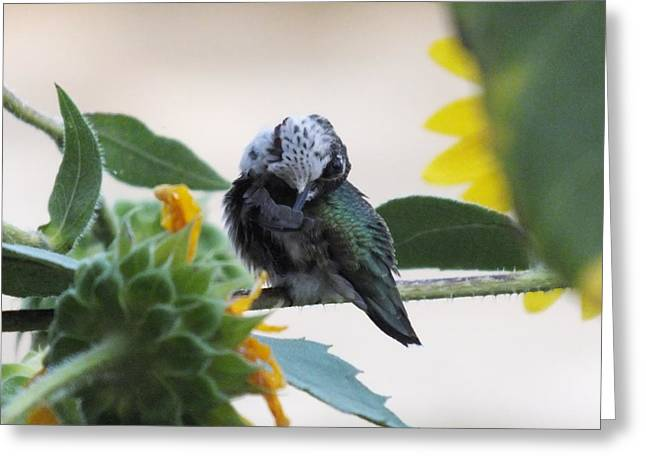 Ruby-throated Hummingbird Jj Greeting Card by Cindy Treger