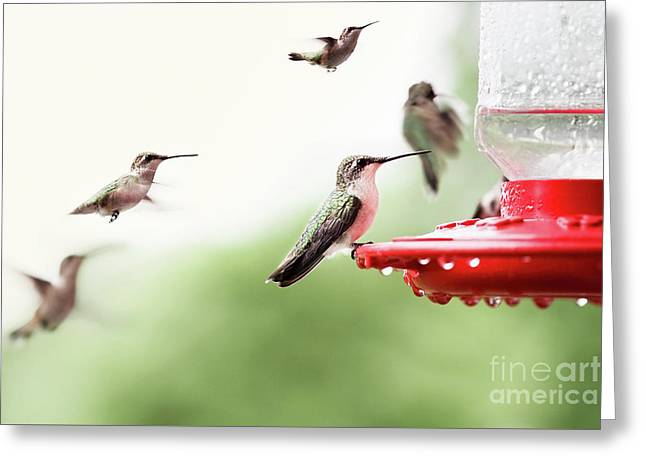 Greeting Card featuring the photograph Ruby-throated Hummingbirds by Stephanie Frey