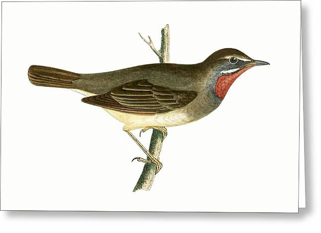 Ruby Throated Warbler Greeting Card by English School