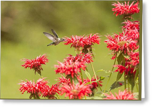 Rubythroated Hummingbird 2014-5 Greeting Card by Thomas Young