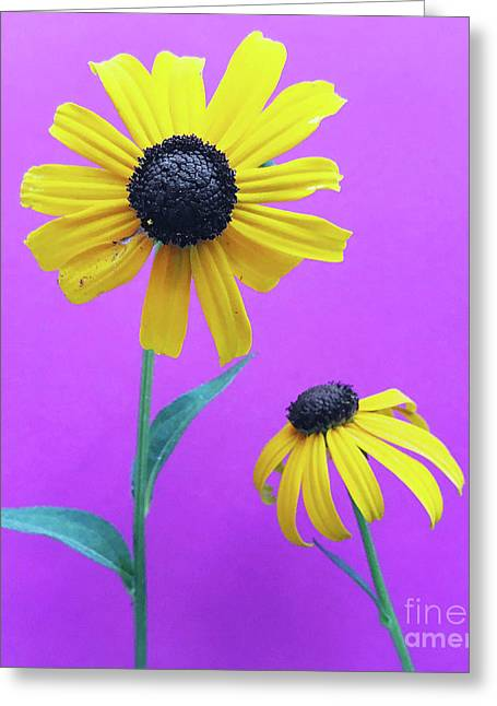 Greeting Card featuring the photograph Rudbeckia 3 by Cindy Garber Iverson