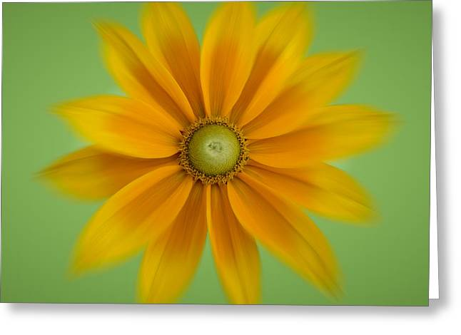 Rudbeckia Blossom Irish Eyes - Square Greeting Card