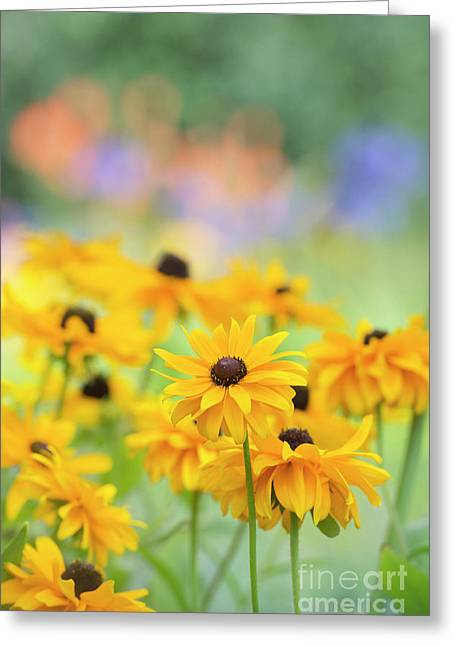 Rudbeckia Indian Summer Flowers Greeting Card by Tim Gainey