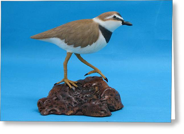 Ruddy Turnstone Greeting Card by Jack Murphy