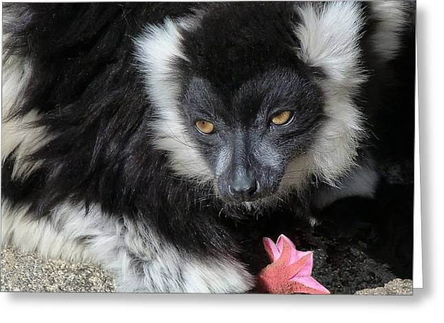 Ruffed Lemur With Pink Flower Greeting Card