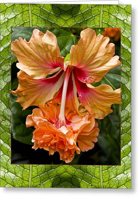 Greeting Card featuring the photograph Ruffled Beauty by Bell And Todd