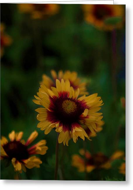 Greeting Card featuring the photograph Ruffled Up by Cherie Duran