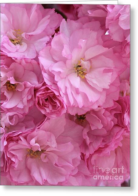 Ruffly Pink Blossoms Greeting Card