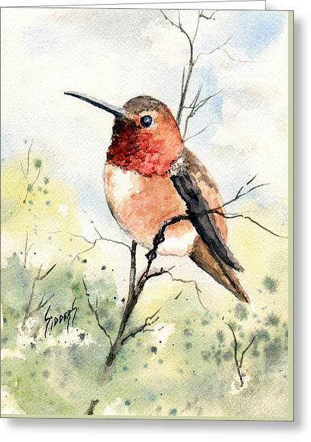 Rufous Hummingbird Greeting Card by Sam Sidders