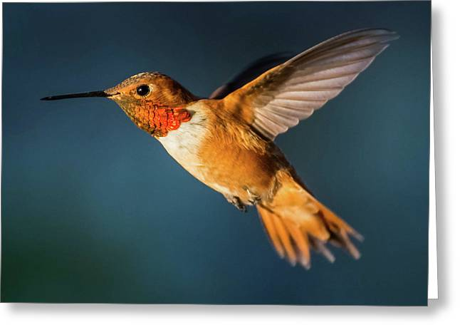 Rufous Greeting Card