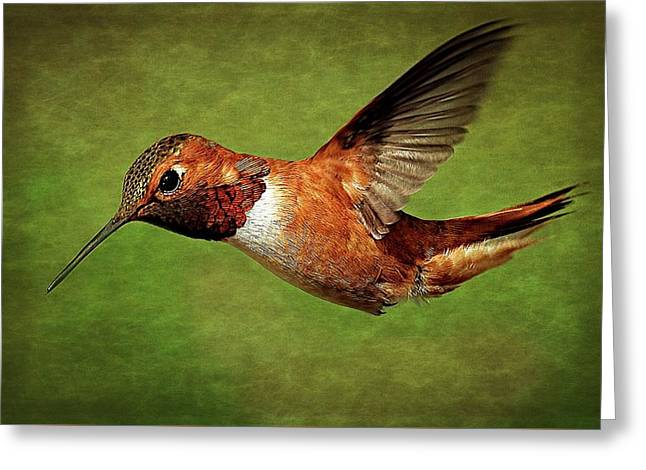 Rufous Portrait Greeting Card