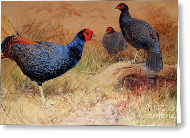 Rufous Tailed Crested Pheasant Greeting Card
