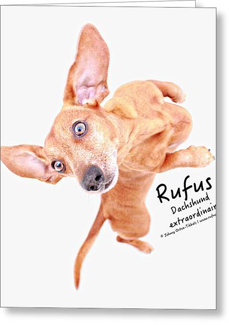 Rufus Dachshund Extraordinaire  Greeting Card by Johnny Ortez-Tibbels