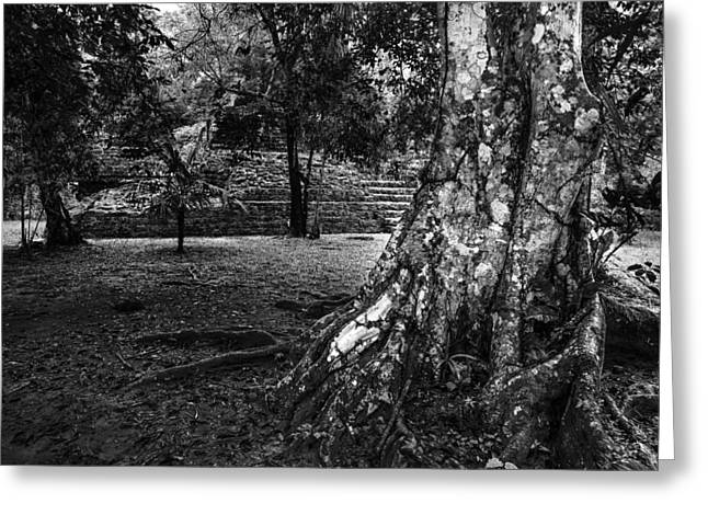 Greeting Card featuring the photograph Ruins Of Tikal by Yuri Santin