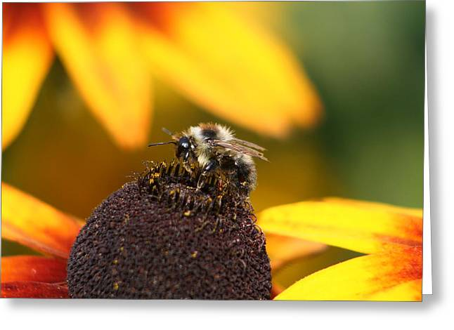 Rumble Bee Greeting Card