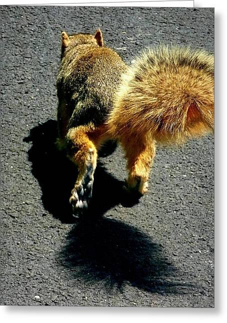 Runaway Fox Squirrel Greeting Card by Beth Akerman