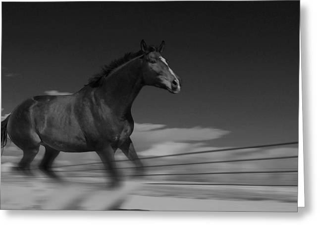 Running Free Greeting Card by Angie Wingerd