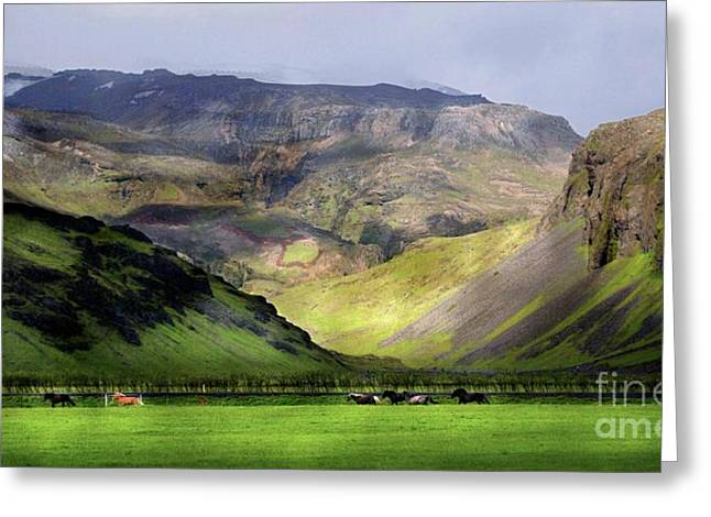 Running Horses Iceland Greeting Card by Louise Fahy