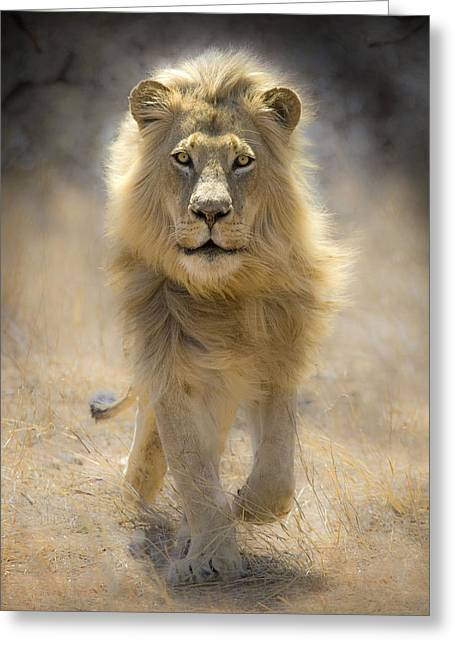 African Cat Greeting Cards - Running Lion Greeting Card by Stu  Porter