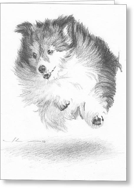 Running Sheltie Pencil Porrait Greeting Card by Mike Theuer
