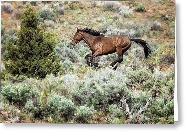 Greeting Card featuring the photograph Running Through Sage by Belinda Greb