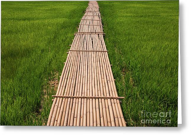 Greeting Card featuring the photograph Rural Green Rice Fields And Bamboo Bridge. by Tosporn Preede