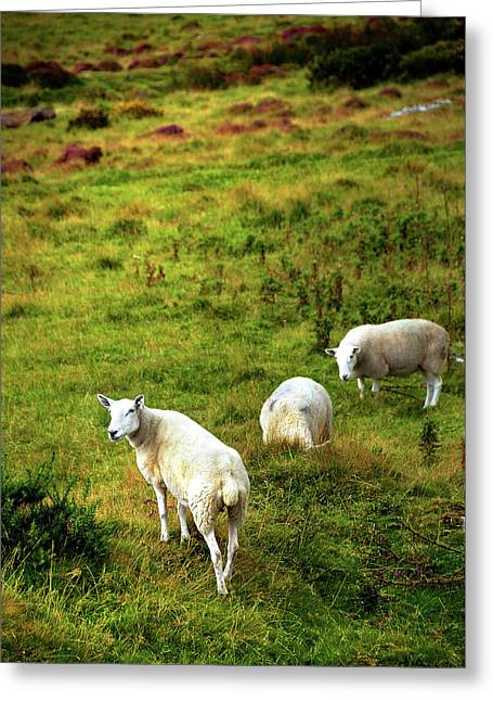 Greeting Card featuring the photograph Rural Idyll. Wicklow. Ireland by Jenny Rainbow