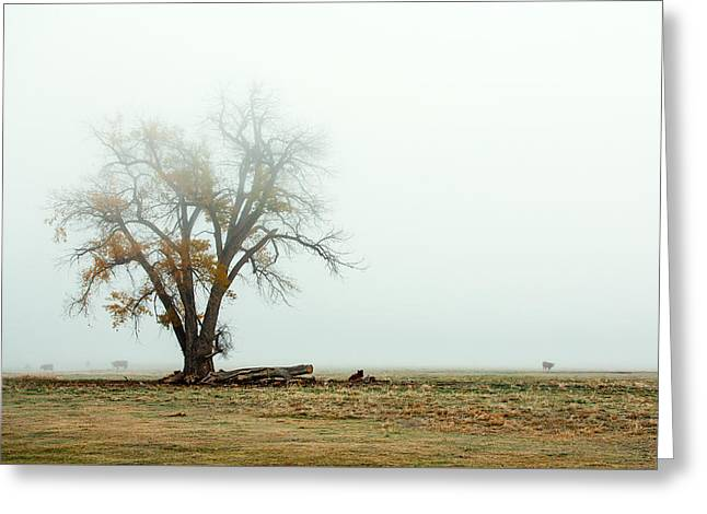 Rural Pasture And Tree Greeting Card by Todd Klassy