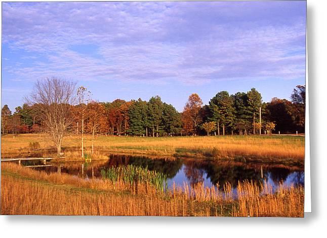 Rural Pond - 1 Greeting Card by Randy Muir